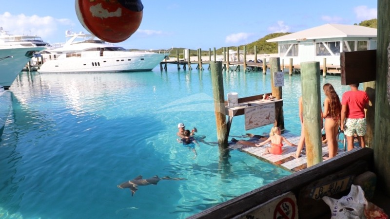 Feeding the nurse sharks