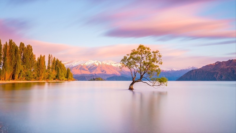 That Wanaka Tree at sunrise  Wanaka, New Zealand
