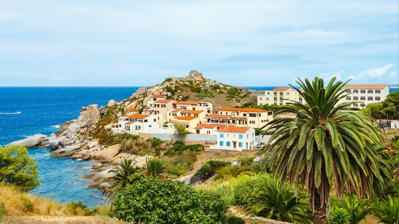 Beautiful view of Calvi town with castle on hill with palm trees in summertime, France