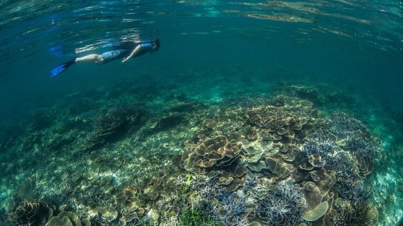 A snorkeler explores a diverse coral reef in the Mergui Archipelago, Myanmar
